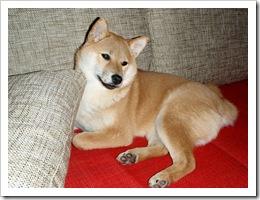 Yumi-2009-02-02