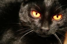 black_cat_xchng